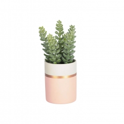 Flower Zelena Очиток в розовом керамическом горшке