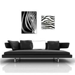 Картина Zebra