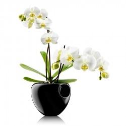 Горшок для орхидеи Orchid Pot черный